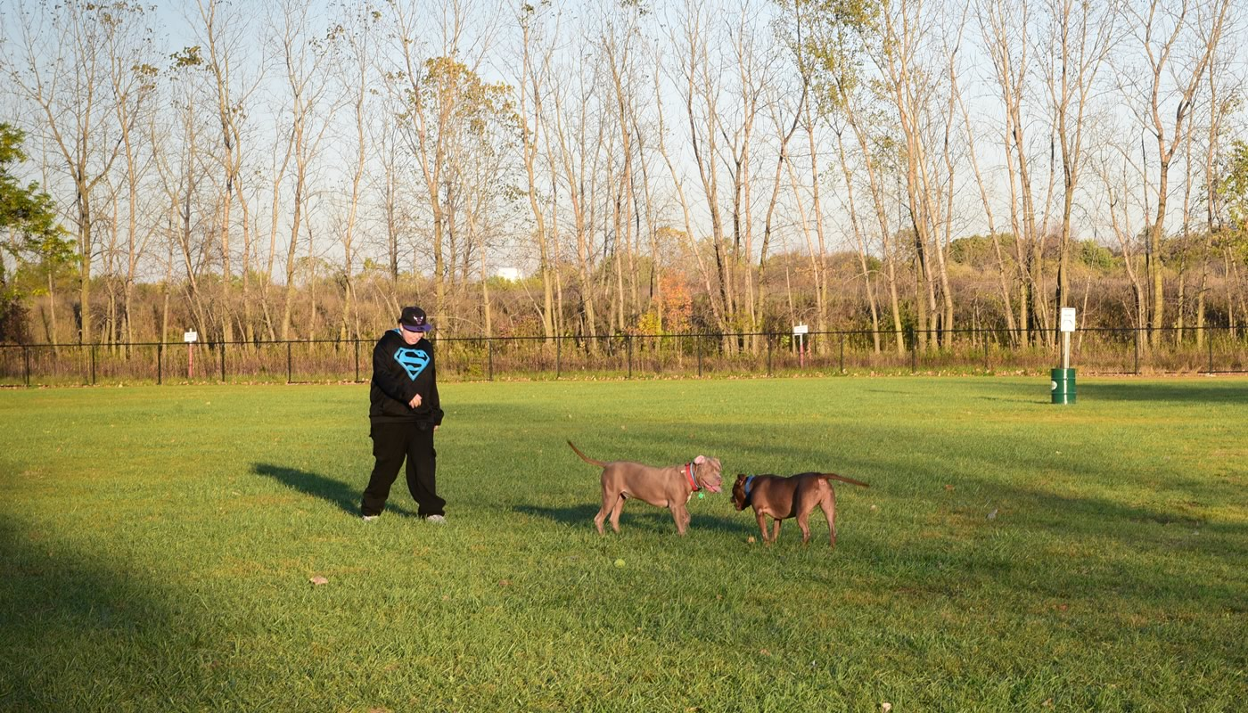 A person with two dogs at Miller Meadow Off-Leash Dog Area