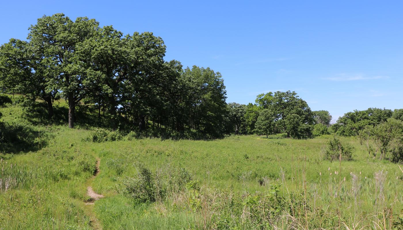 landscape at Bluff Spring Fen