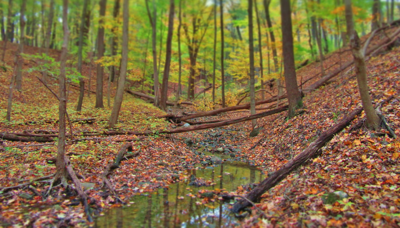 a stream in Paw Paw Woods
