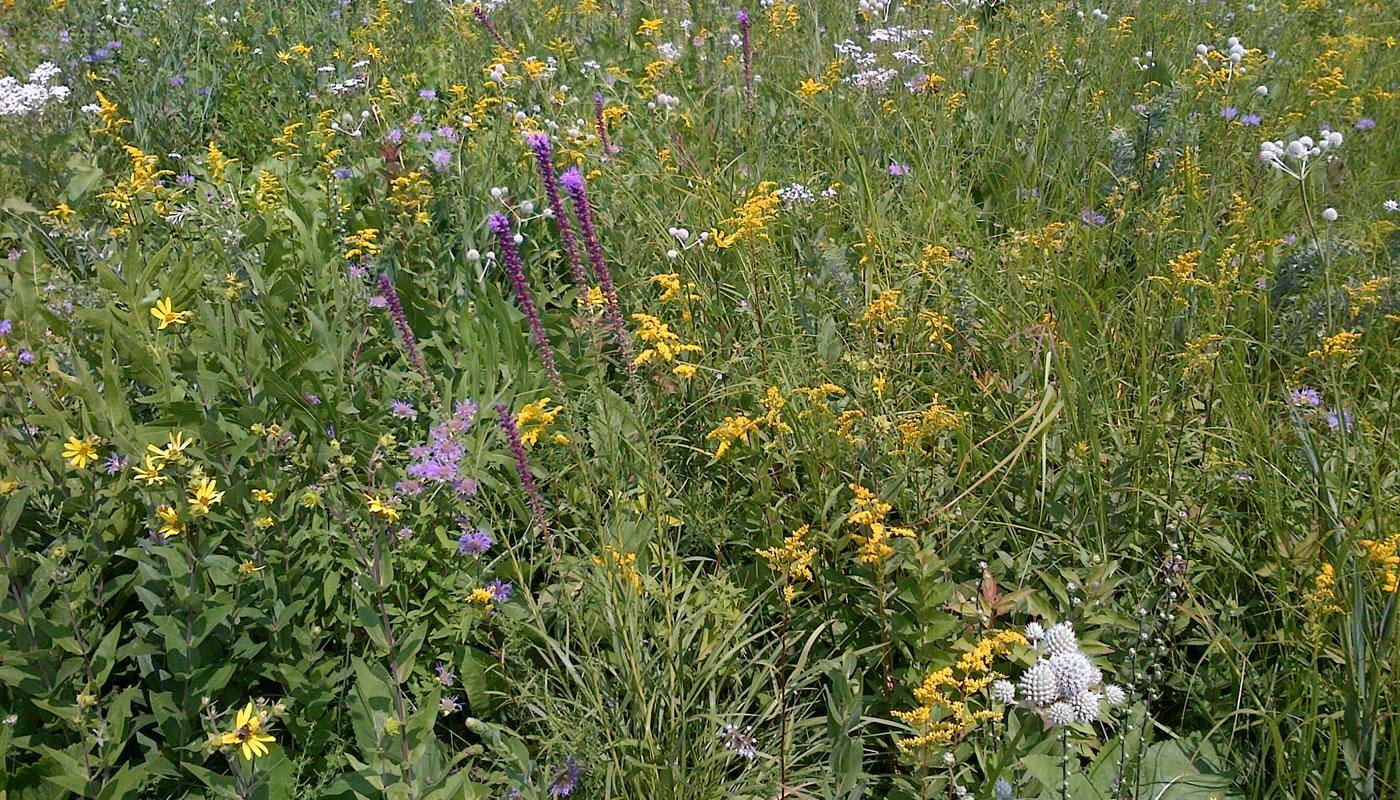 prairie plants at Somme Prairie