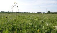 part of the prairie at Somme Prairie Nature Preserve
