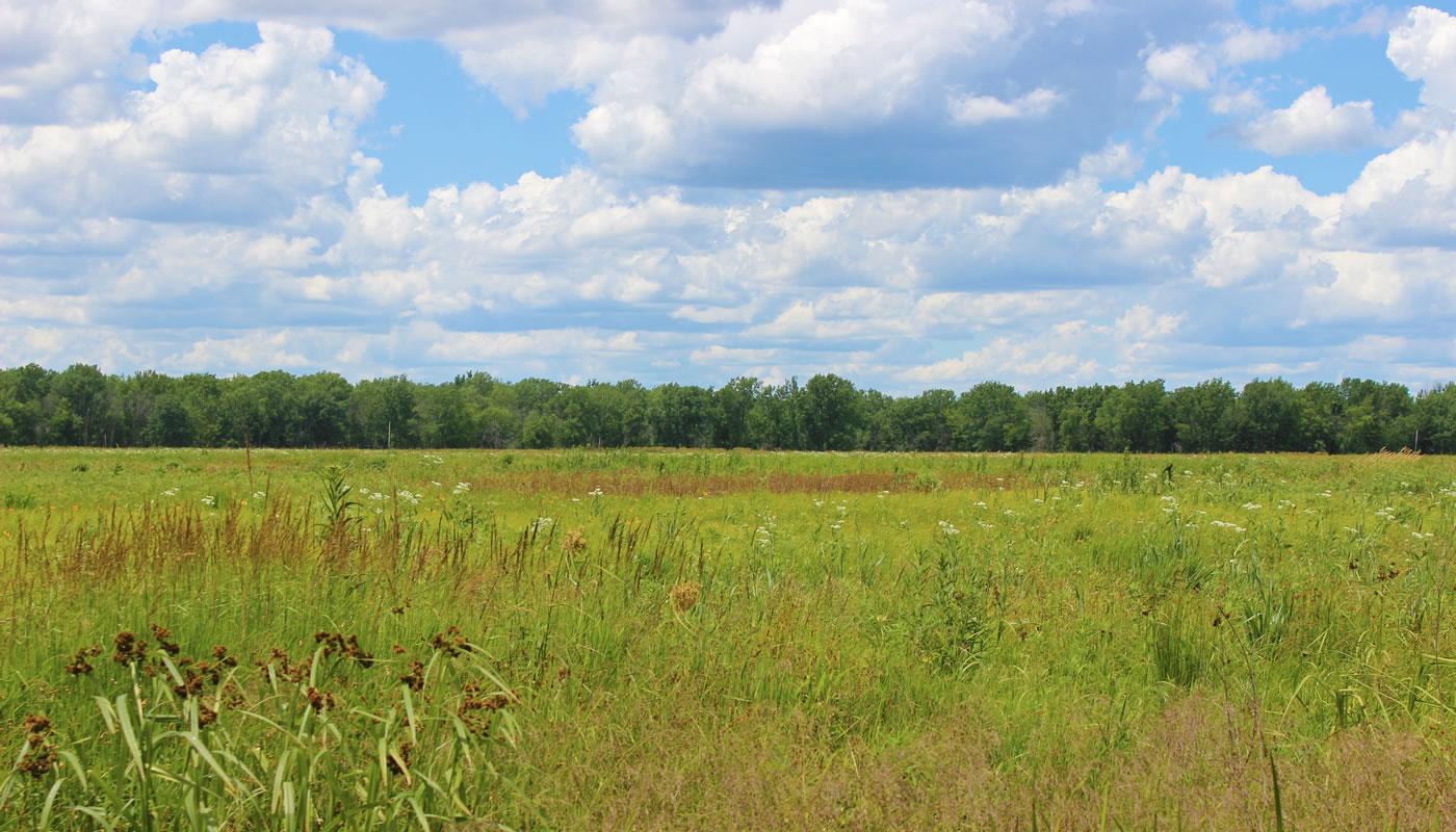 an open meadow at Bobolink Meadow