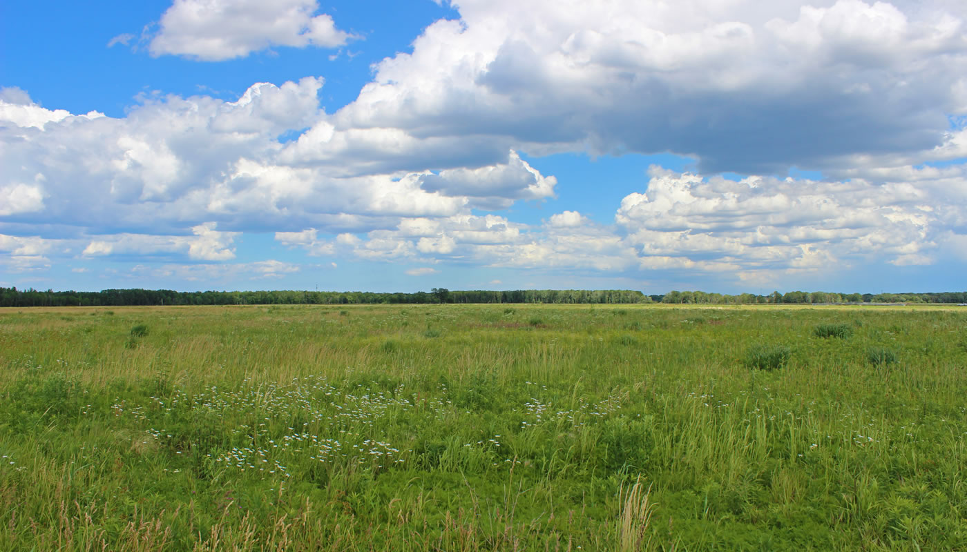 an open meadow at Bobolink Meadow