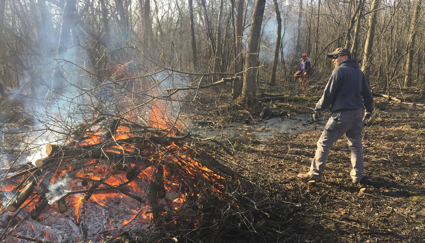 a volunteer throwing invasive brush onto a fire at Brookfield Woods
