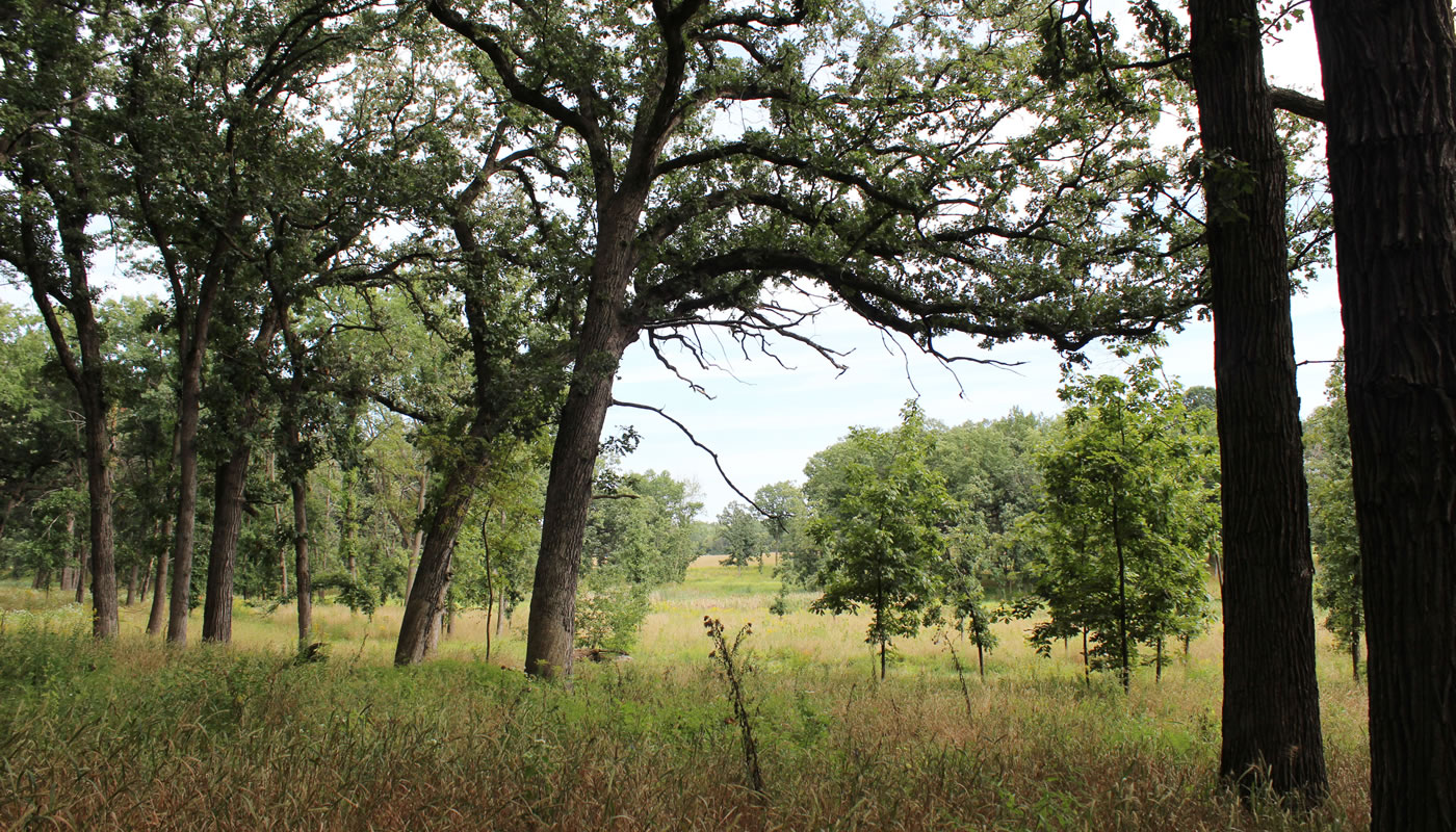 a savanna at Deer Grove