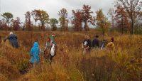 volunteers collecting seeds in a field at Deer Grove