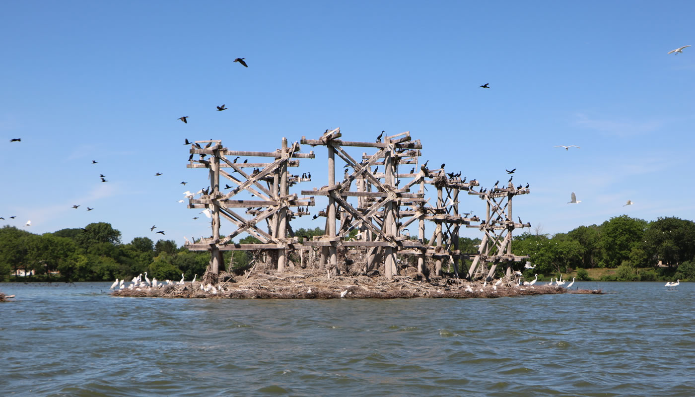 a manmade structure on an island with hundreds of herons and cormorants at Baker's Lake