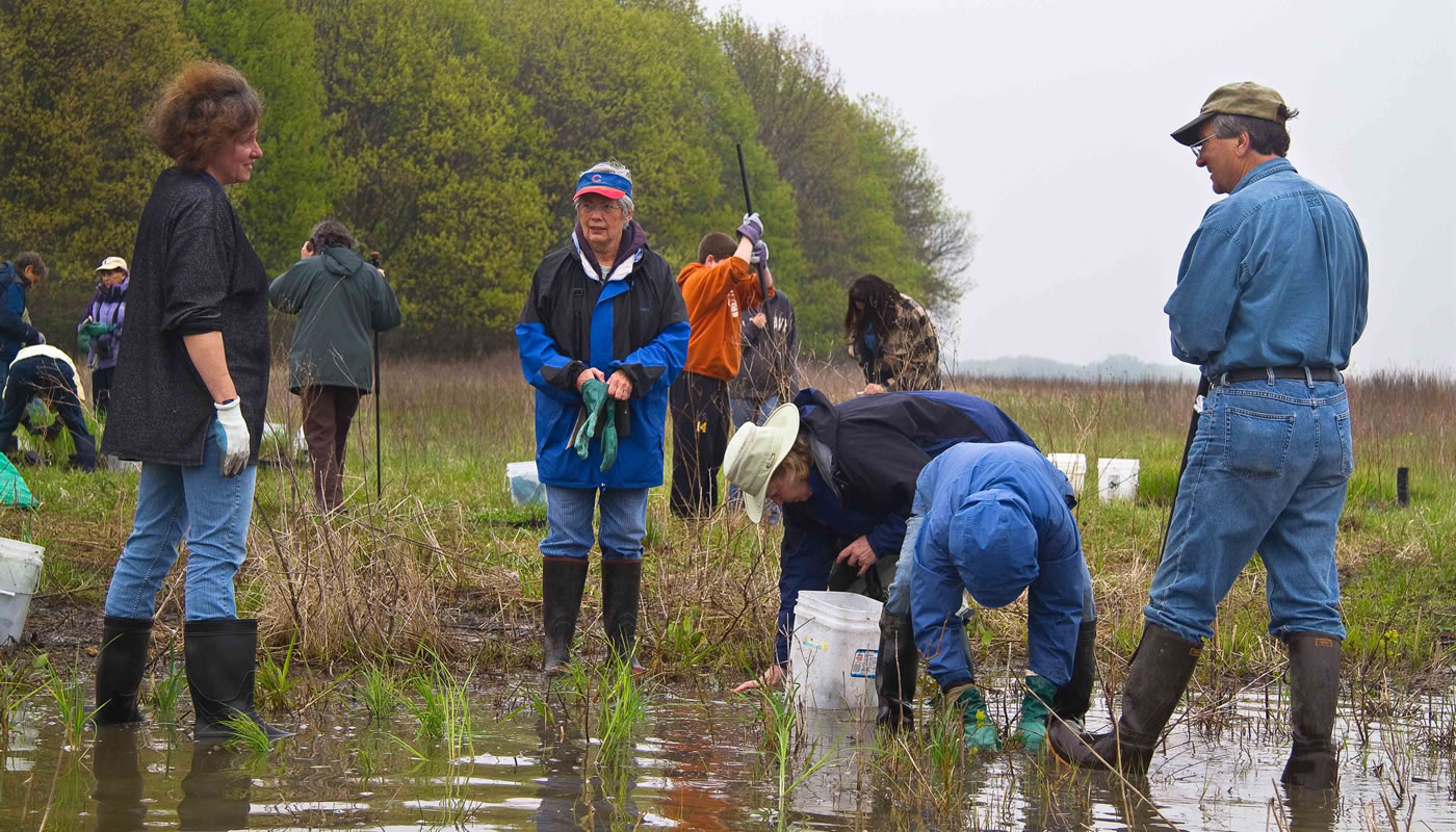volunteers restoring a wet area at Bartel Grassland