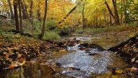 creek in fall at Black Partridge Woods