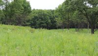 a savanna opening at Cap Sauers Holding Nature Preserve