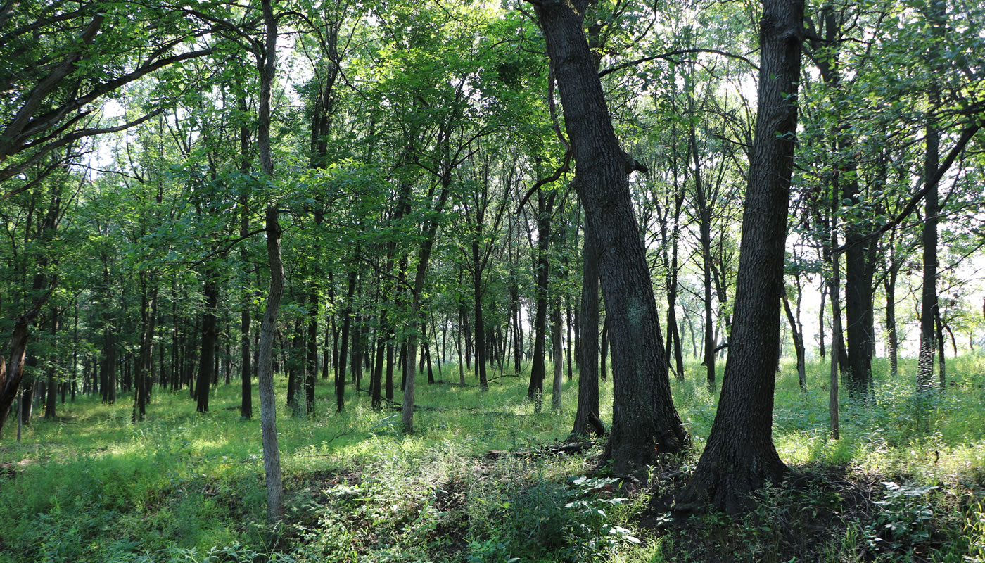 woodland at Country Lane Woods