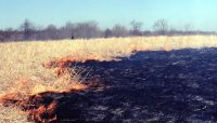 a prescribed burn at Crabtree Nature Center in 1974