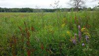 a wetland at Cranberry Slough