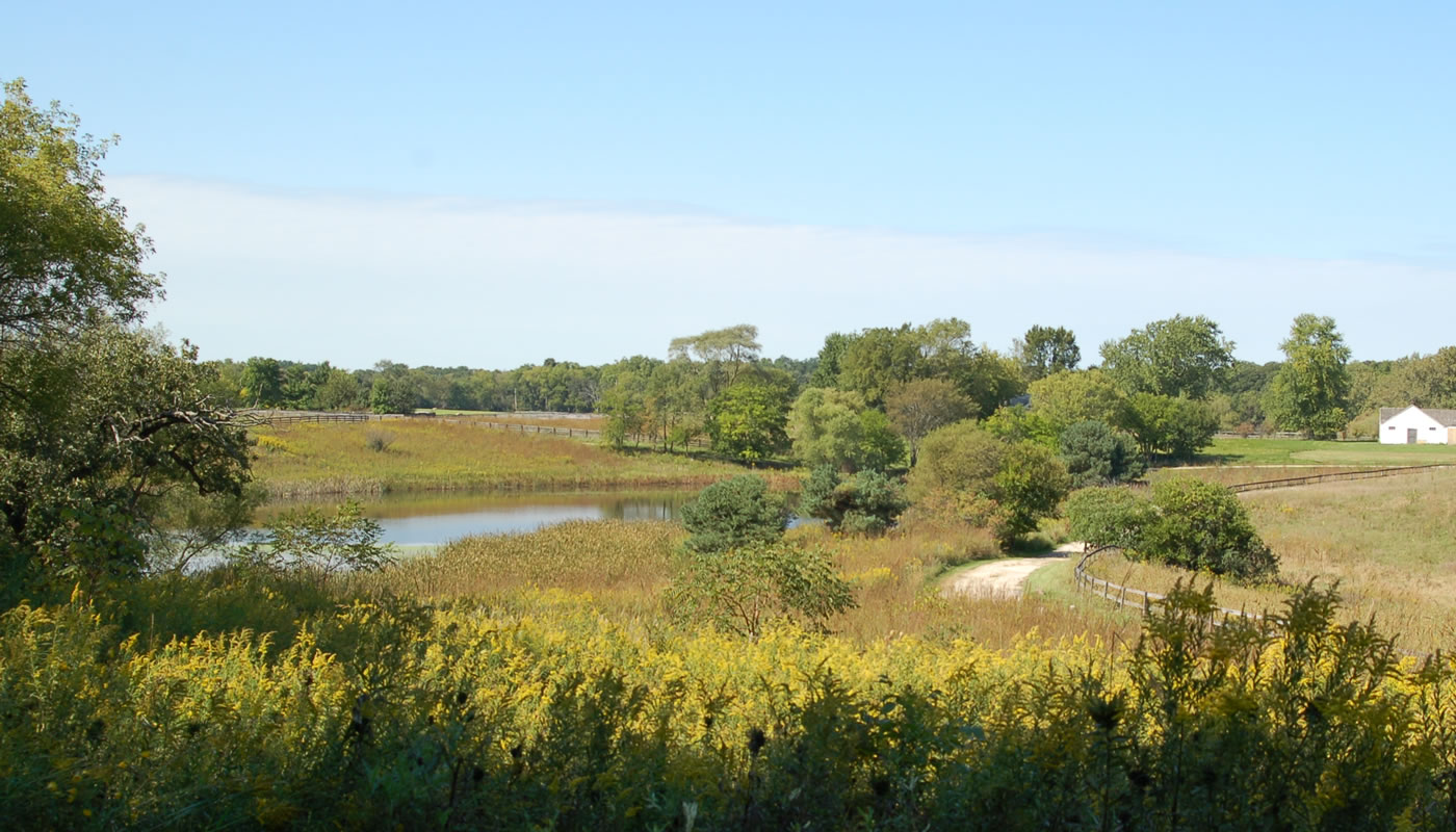 a meadow with a pond at Horizon Farm