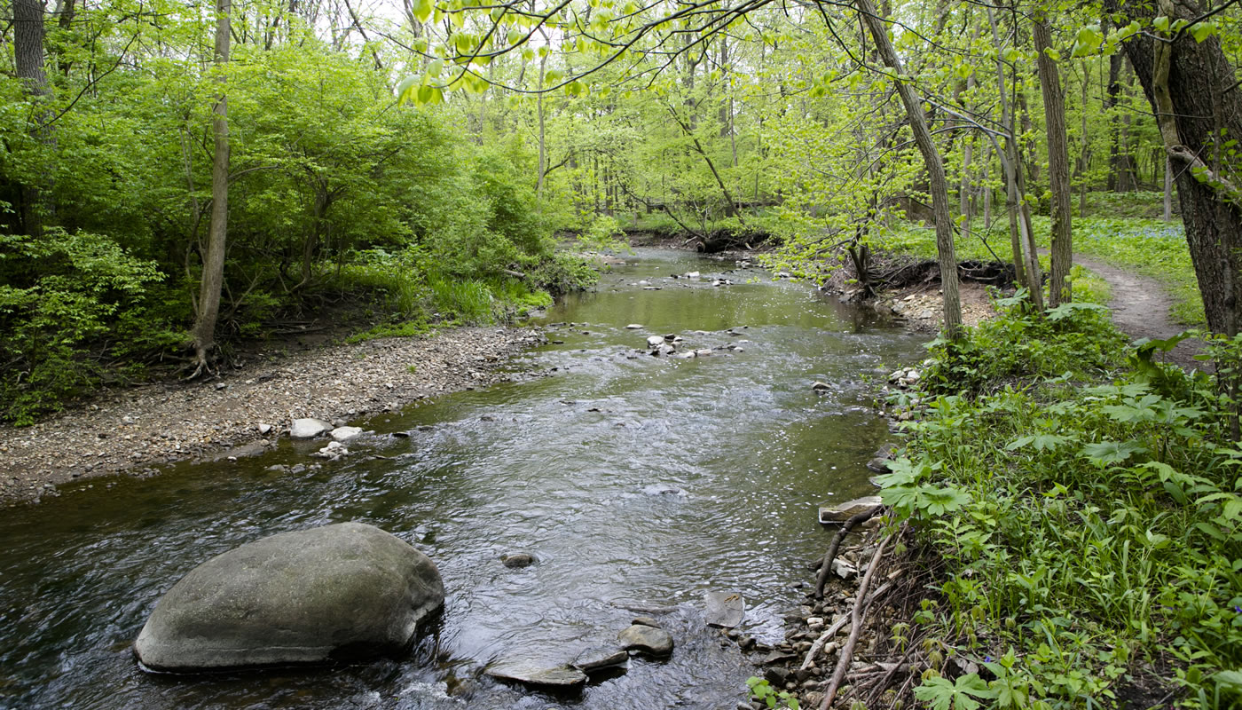 Mill Creek at McClaughrey Springs Woods