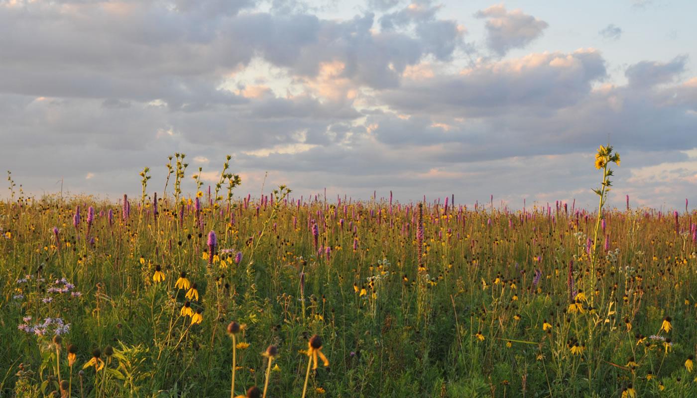 open grassland at Orland Grassland