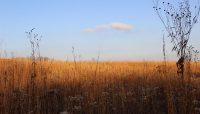 prairie in fall at Carl R. Hansen Woods