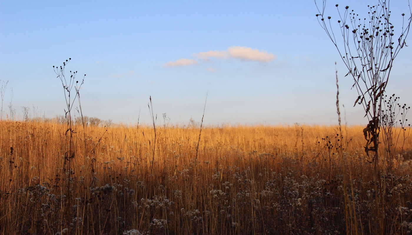 prairie in fall at Carl R. Hansen Woods