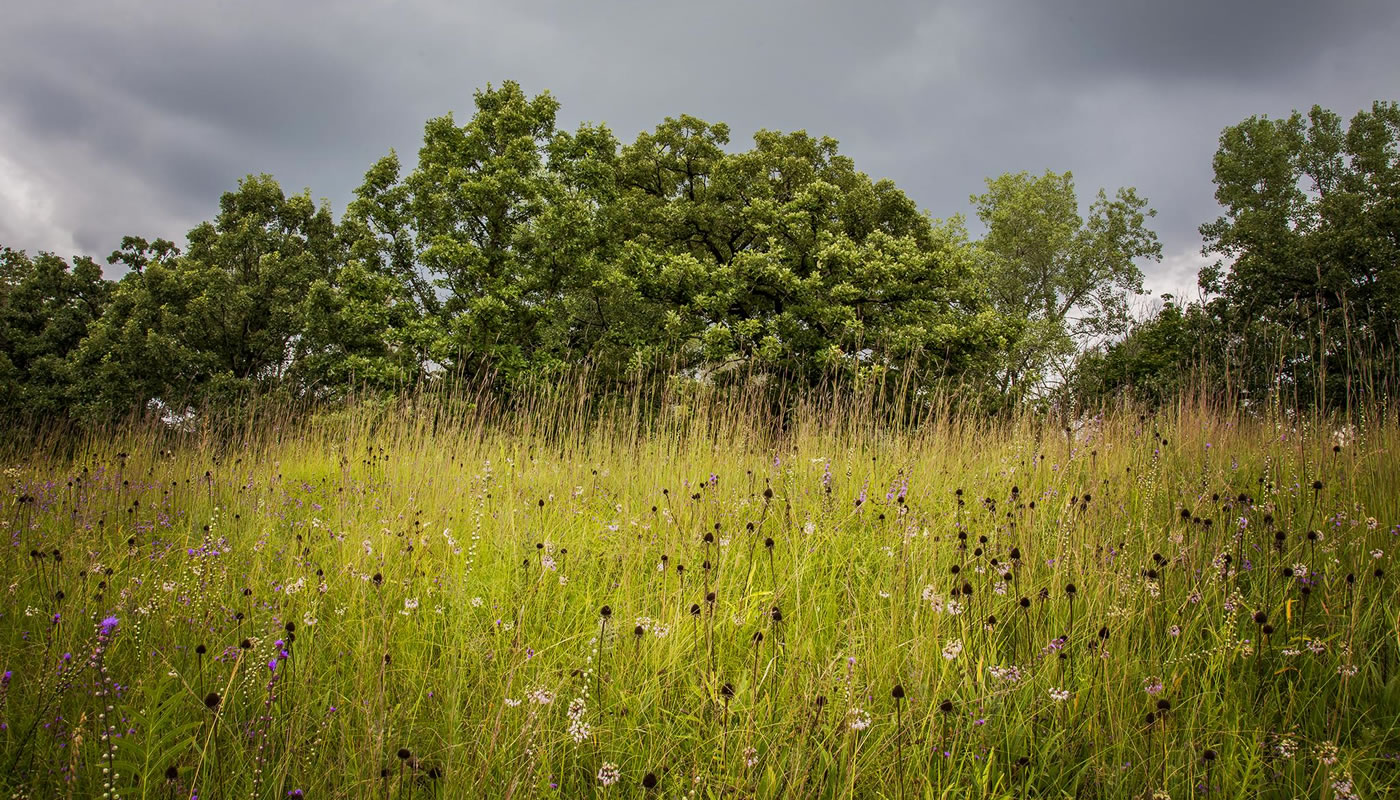 prairie and woodland with storm clouds in the background at Bluff Spring Fen. Photo by Kris DaPra.