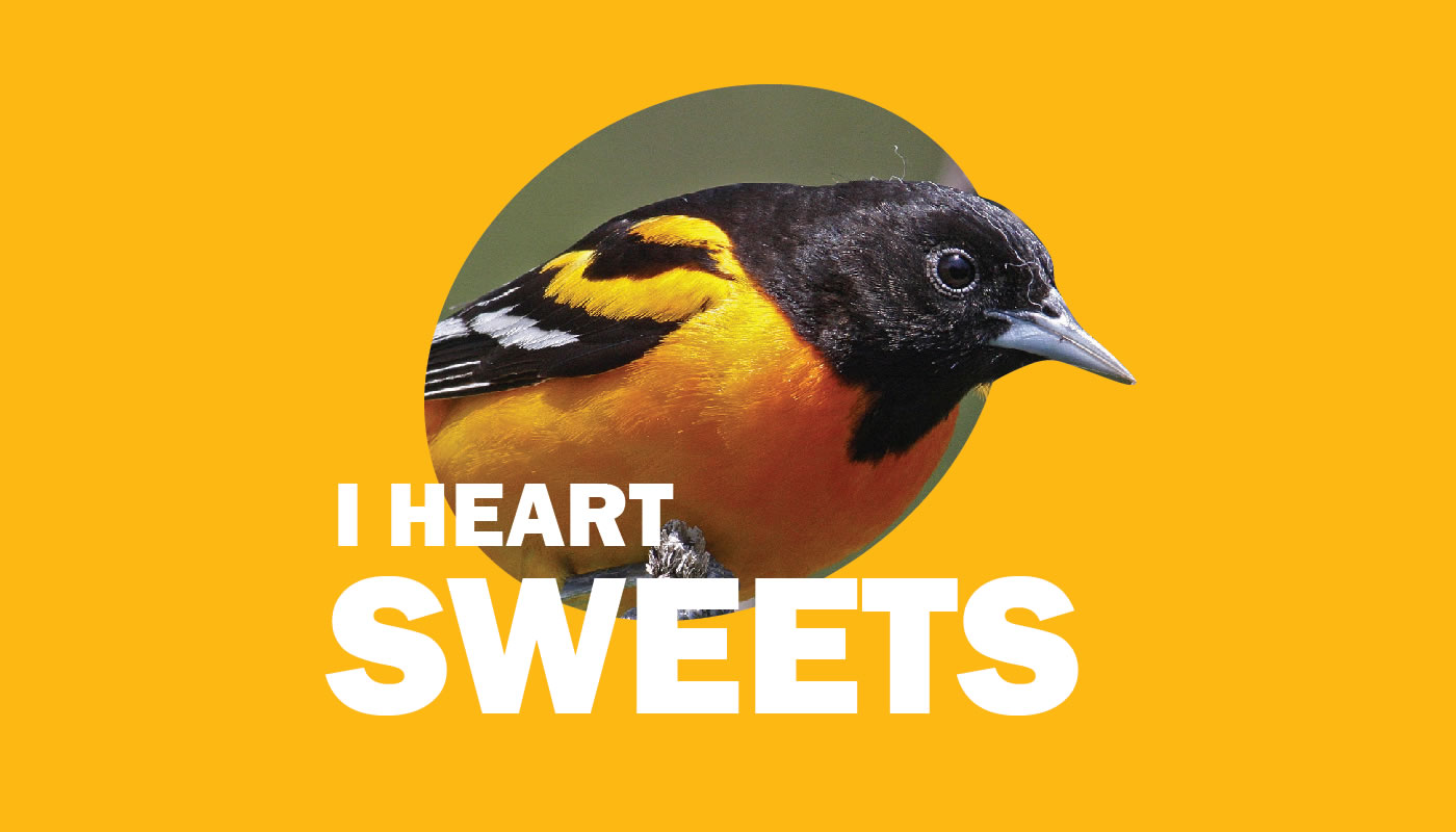 Baltimore oriole photo featuring words: I Heart Sweets