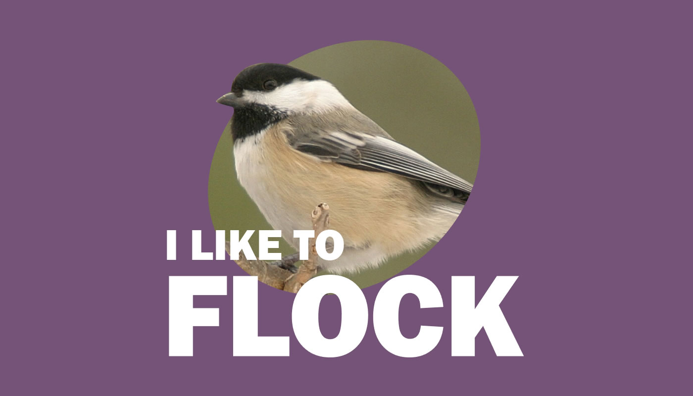 Black-capped chickadee photo with words: I Like to Flock