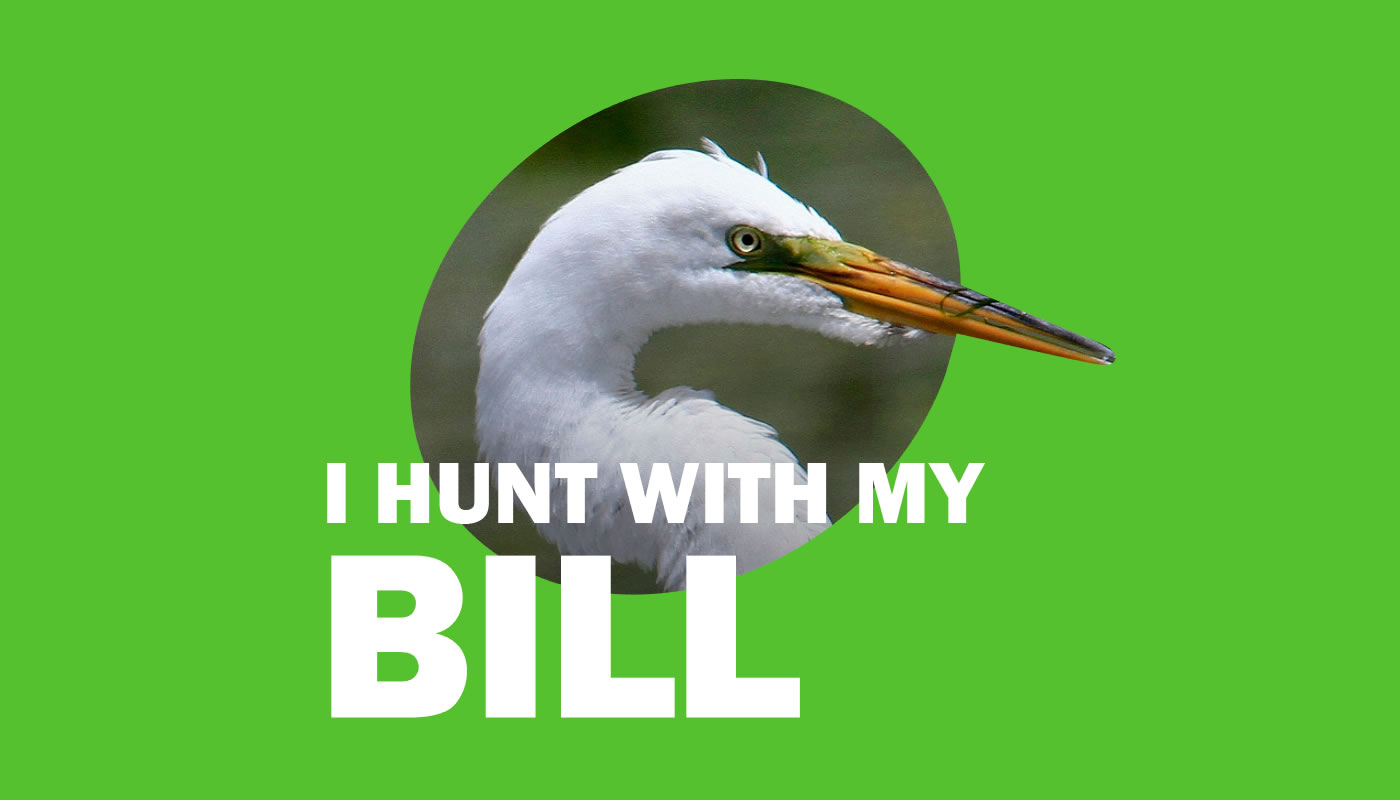 Great egret photo featuring words: I Hunt with My Bill