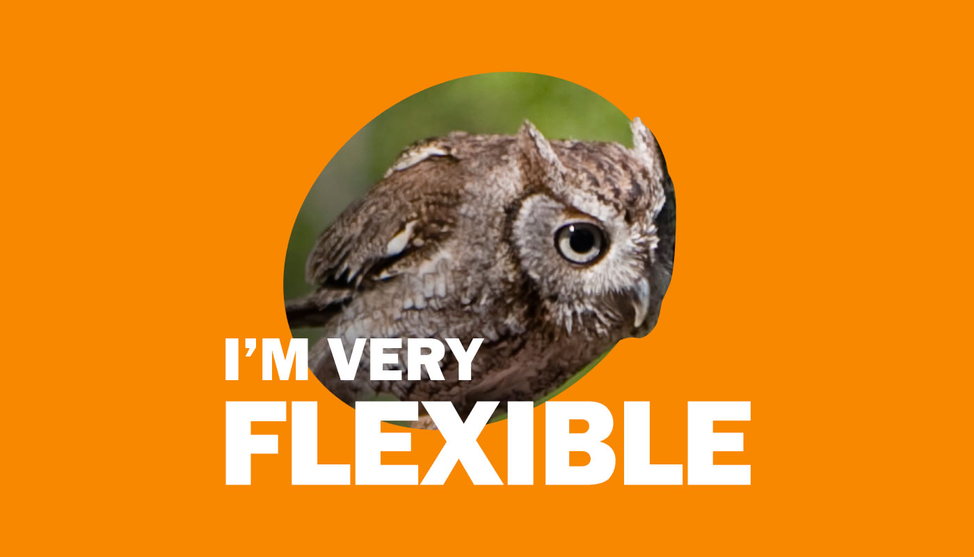 Eastern screech owl photo featuring words: I'm Very Flexible