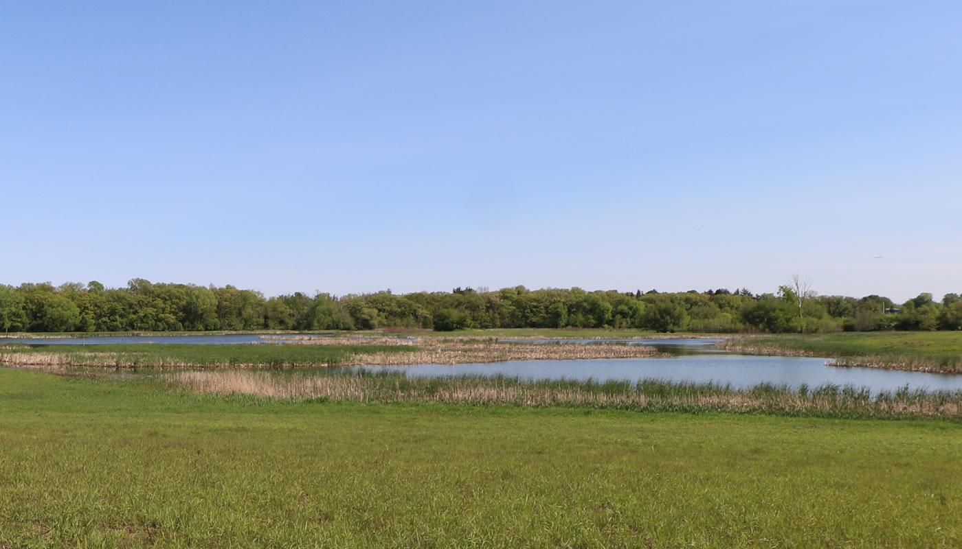 wetlands at Paul Douglas Preserve