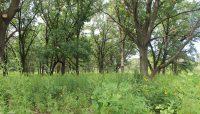 savanna habitat at Powderhorn Lake