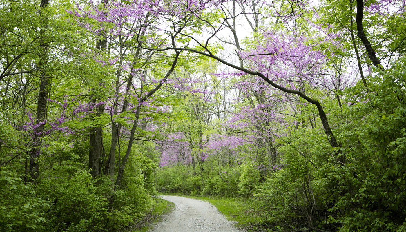 A bend in the Sag Valley Trail at McClaughrey Springs Woods in spring