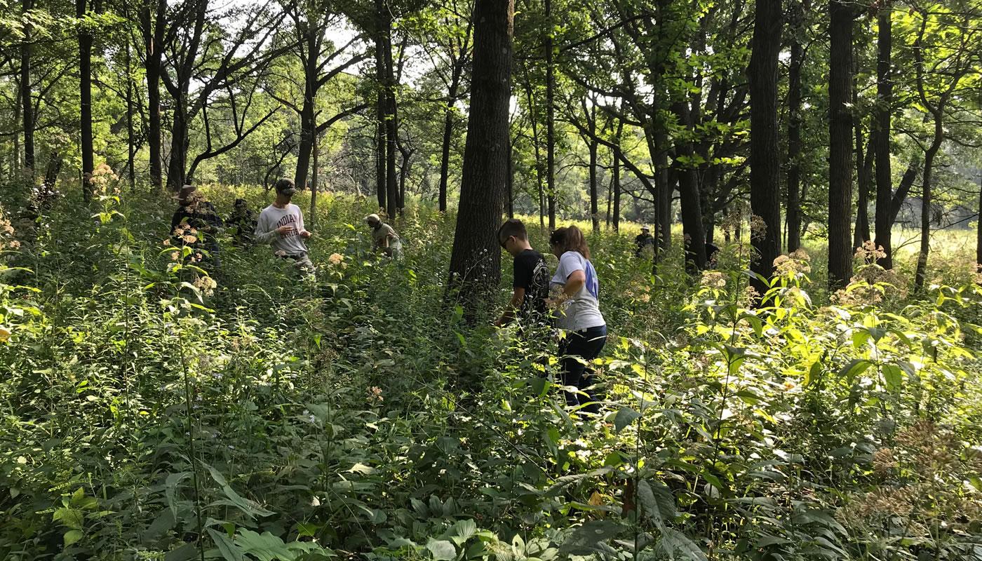 volunteers at Swallow Cliff Woods. Photo by Kris DaPra.