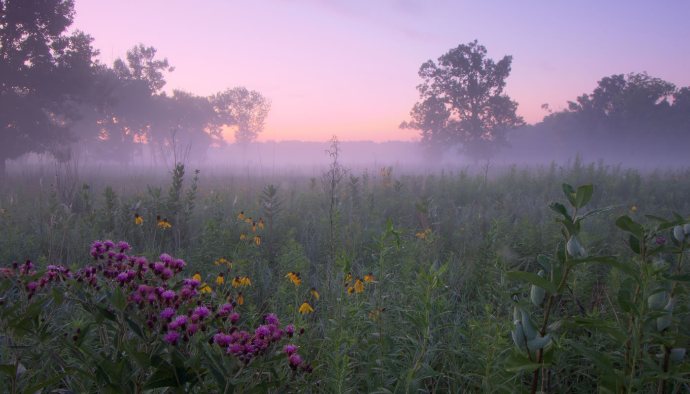 morning on the prairie at Theodore Stone Forest. Photo by Bob Callebert.