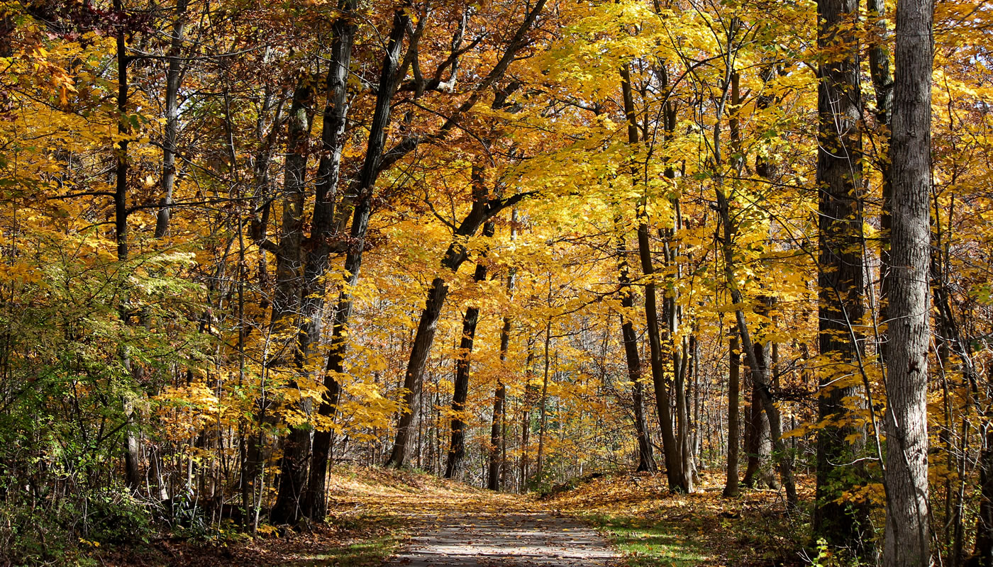Tinley Creek Trail during fall. Photo by Sharon Dobben.