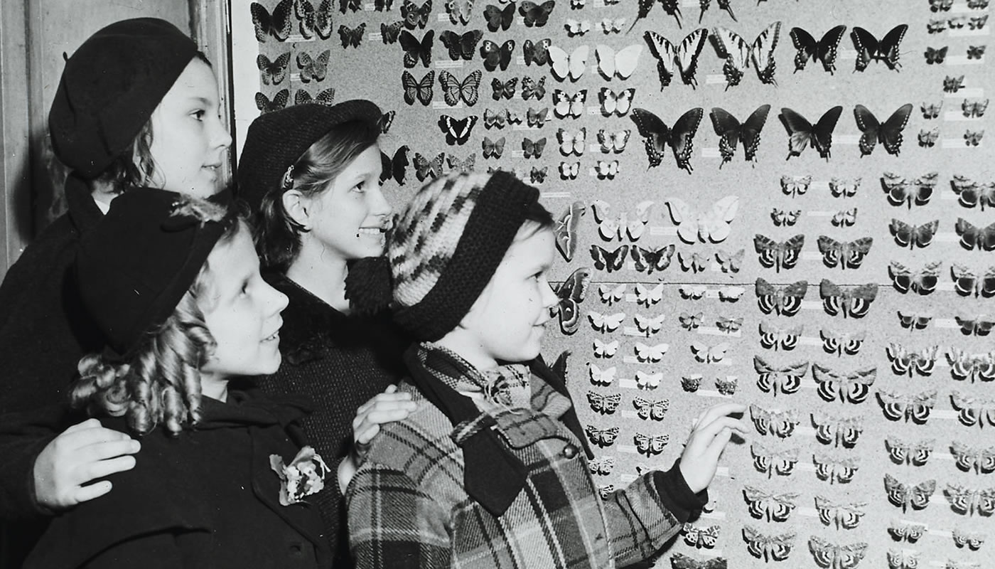 Four children looking at a a butterfly display at Trailside Museum of Natural History. 1930s photograph.