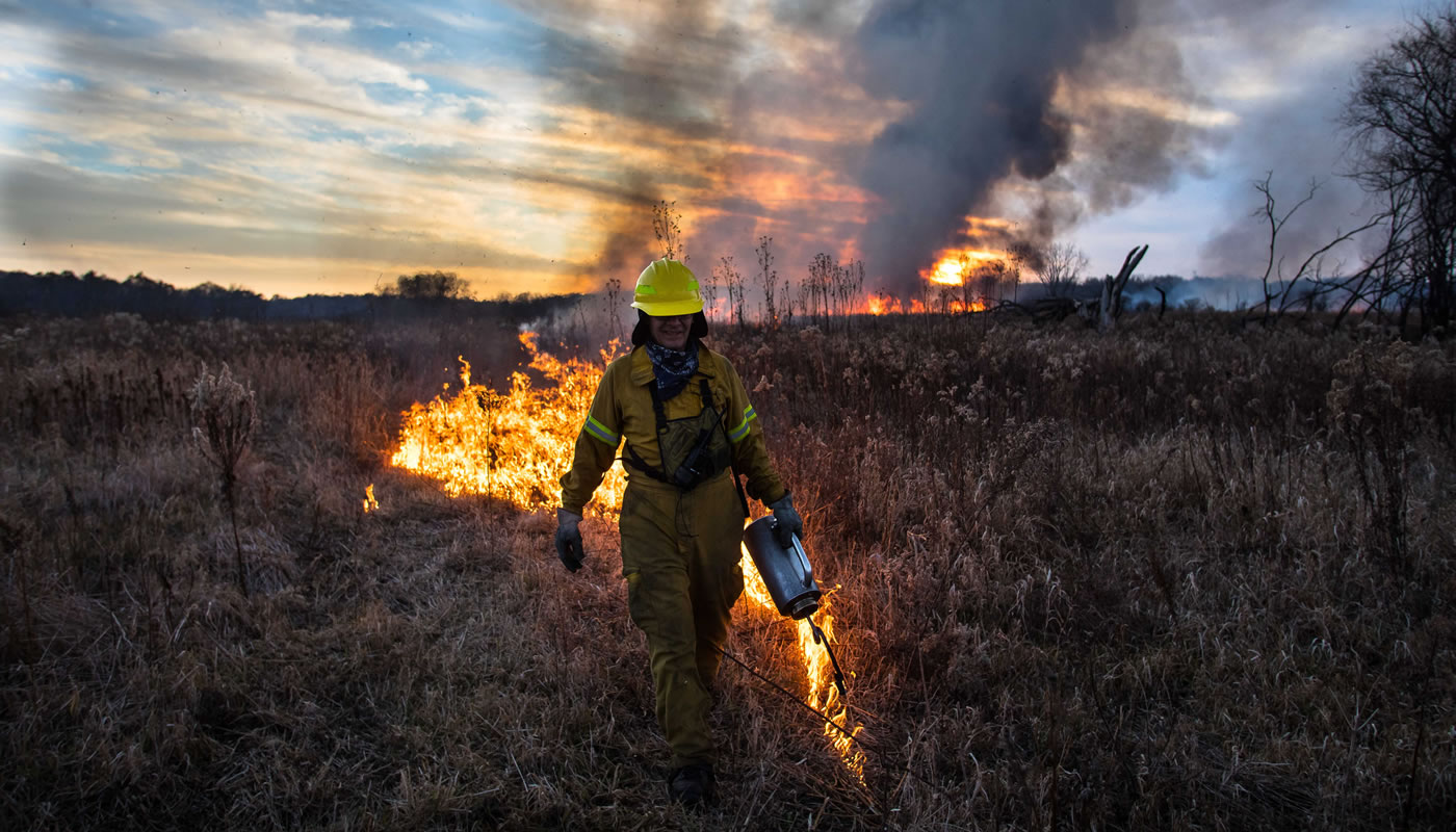 A crew member lights a prescribed burn with a drip torch in an open field.