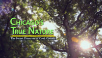 Chicago's True Nature