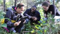 volunteers looking at plants