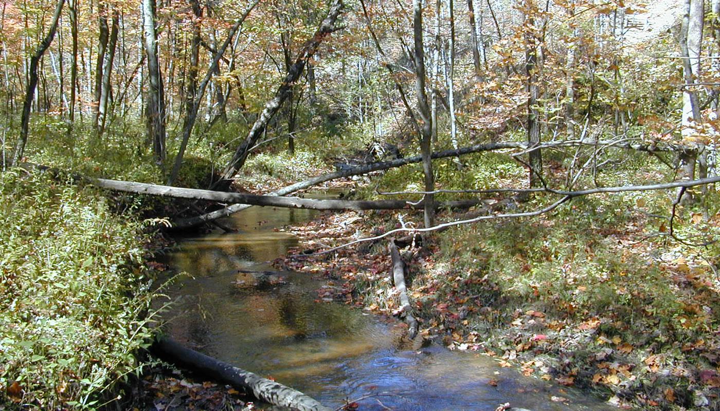 Salt Creek in Deer Grove