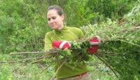 a volunteer carrying cut brush