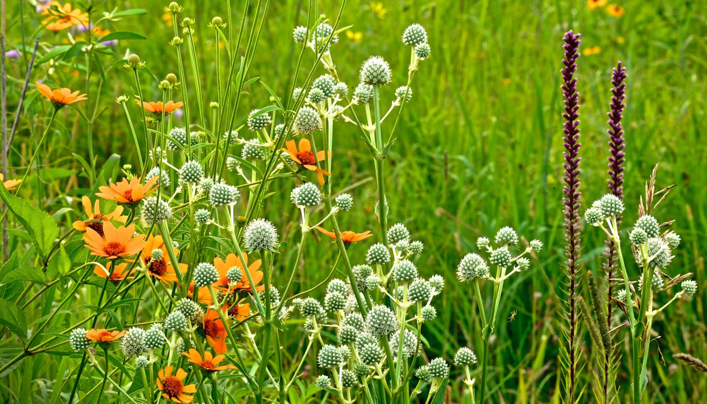 close up of prairie plants