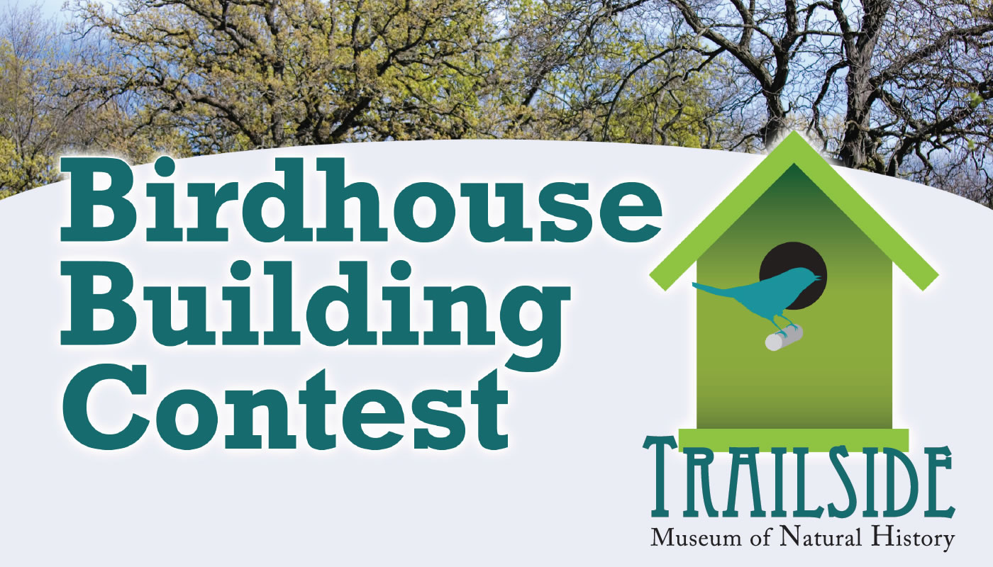 Birdhouse Building Contest