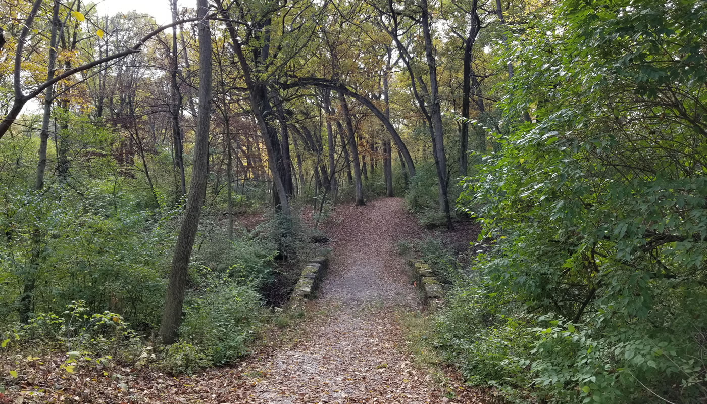 an unpaved trail in the woods at Arie Crown Forest