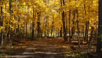 a trail through the woods in fall at Palos Park Woods