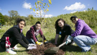 four people planting a tree at Busse Woods