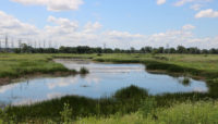 a large expanse of wetlands at Burnham Prairie Nature Preserve
