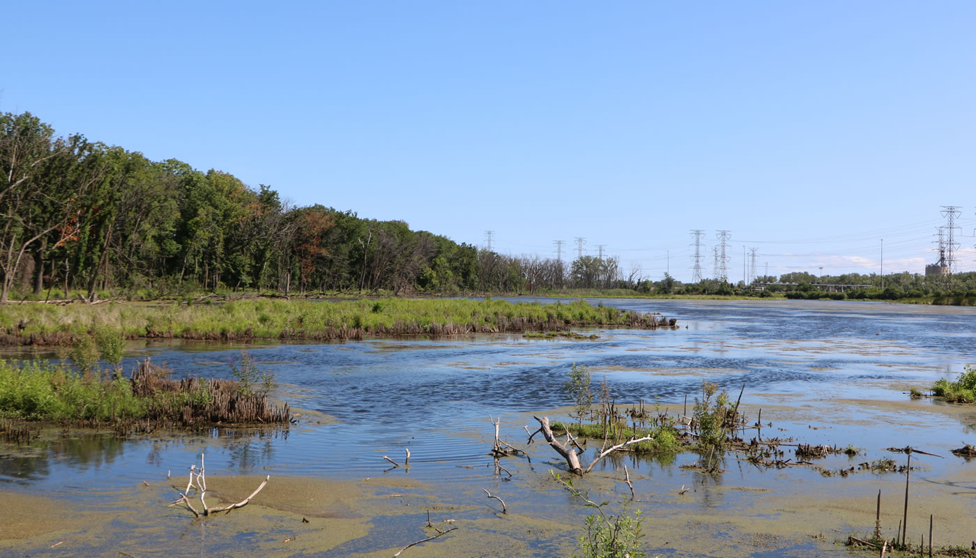 a large marsh at Eggers Grove