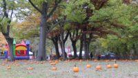 pumpkins in a picnic grove at Eggers Grove