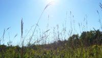 prairie grasses at Sagawau Environmental Learning Center