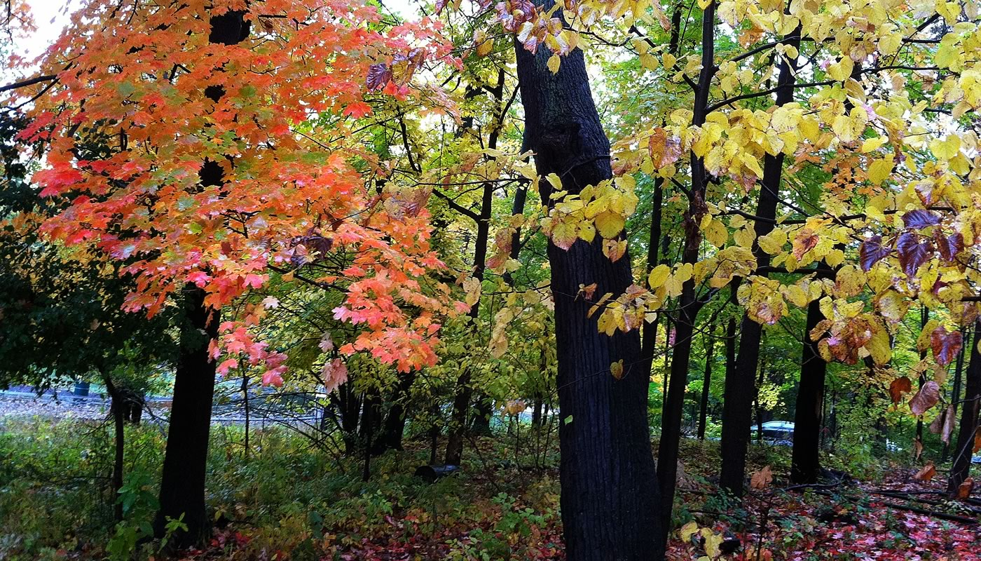 trees with orange and yellow leaves at Trailside Museum