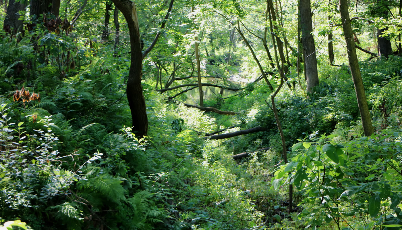 a small ravine at Wampum Lake Woods